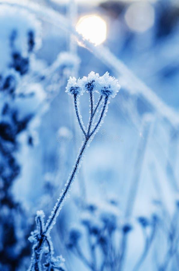 Planta congelada do prado fotografia de stock
