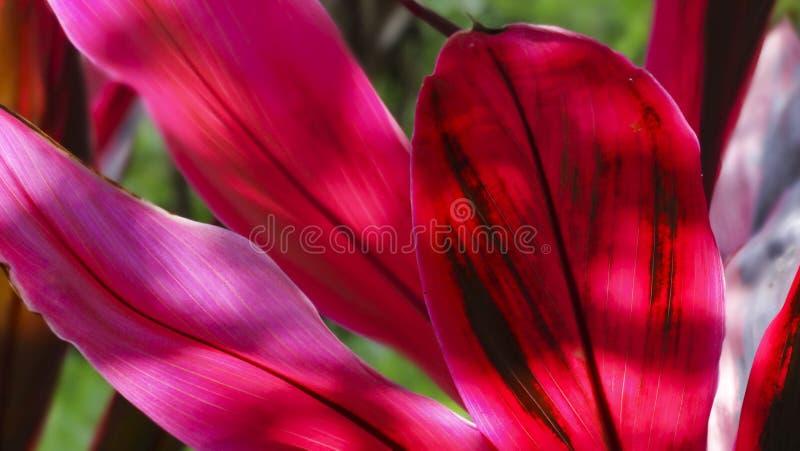 Planta cor-de-rosa na sombra foto de stock royalty free