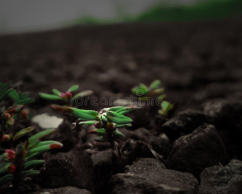 A planta cresce acima na pedra imagem de stock royalty free