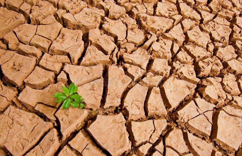 A planta cresce na terra do drough fotos de stock