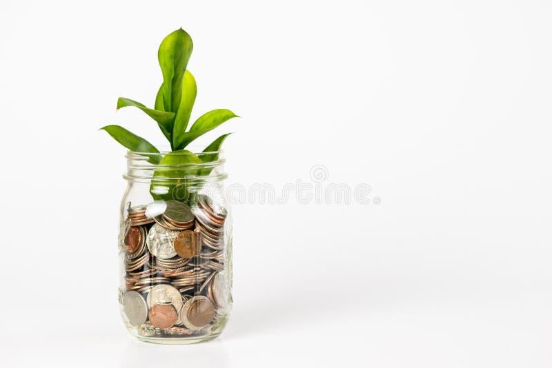 Planta crescente de um frasco completamente das moedas fotografia de stock