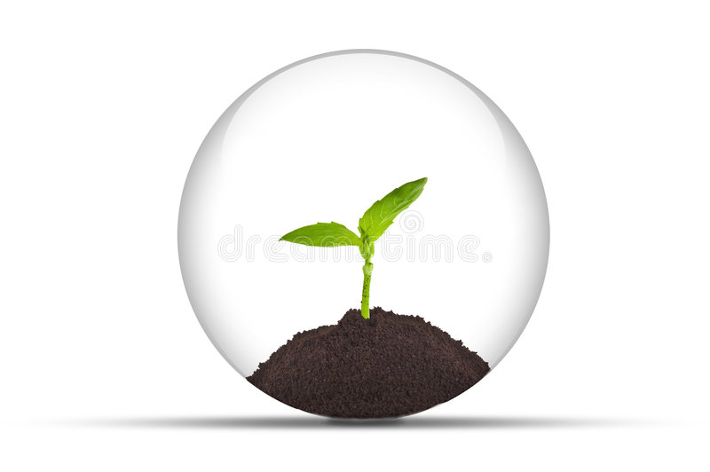 Planta crescente em uma esfera glassy