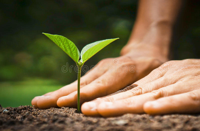 Planta crescente, natureza do amor foto de stock royalty free