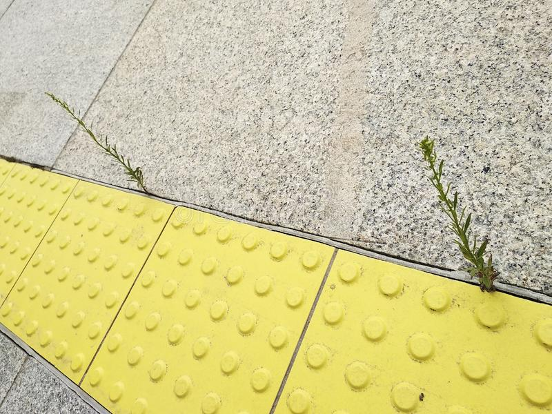 A planta cresceu na distância entre as telhas uma vida, uma perseverança e uma aplicação novas, pequenas para conseguir o objetiv imagens de stock