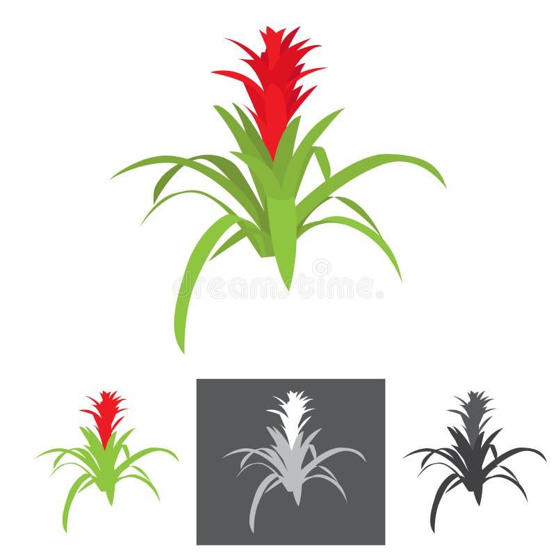 Planta da agave com flor ilustração do vetor