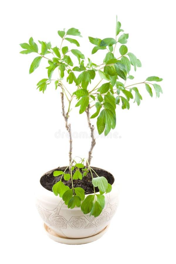 Planta da casa. imagens de stock royalty free