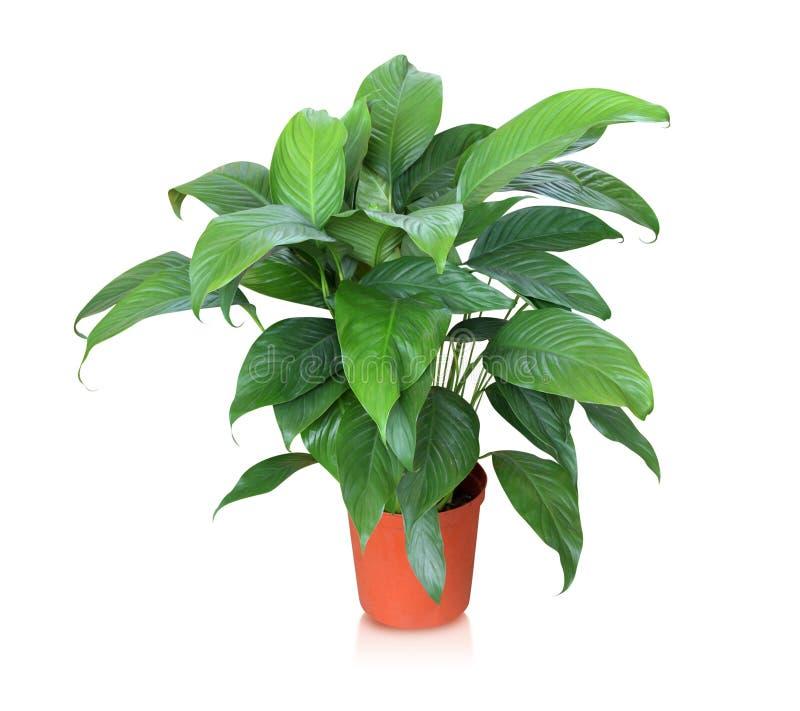 Planta da casa isolada no fundo branco fotografia de stock royalty free