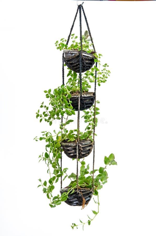 A planta da casa que pendura, faz crochê o trabalho fotografia de stock
