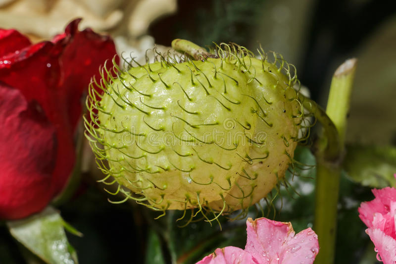 Planta da cisne do close up fotografia de stock