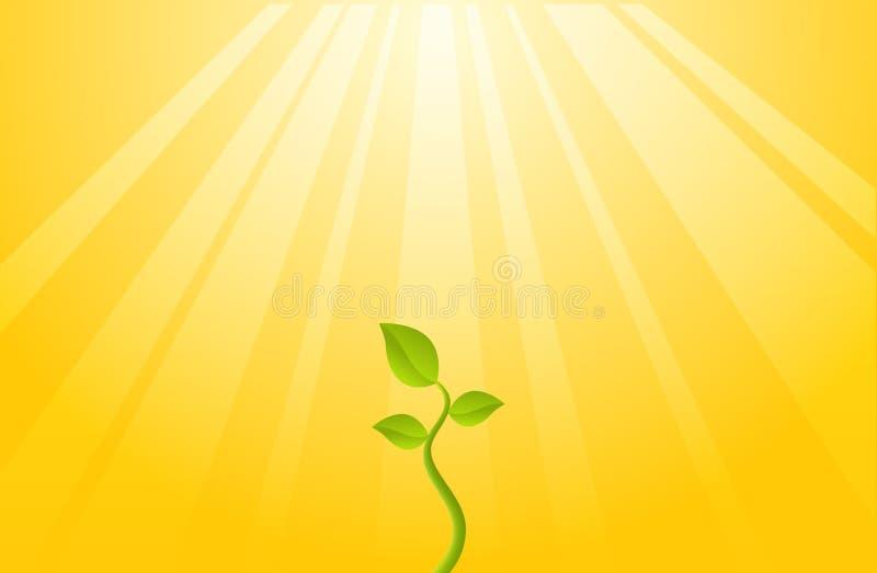 Planta da esperança ilustração royalty free