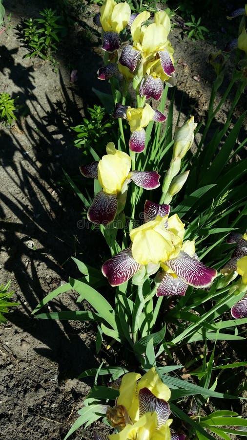 Planta da flor fotografia de stock