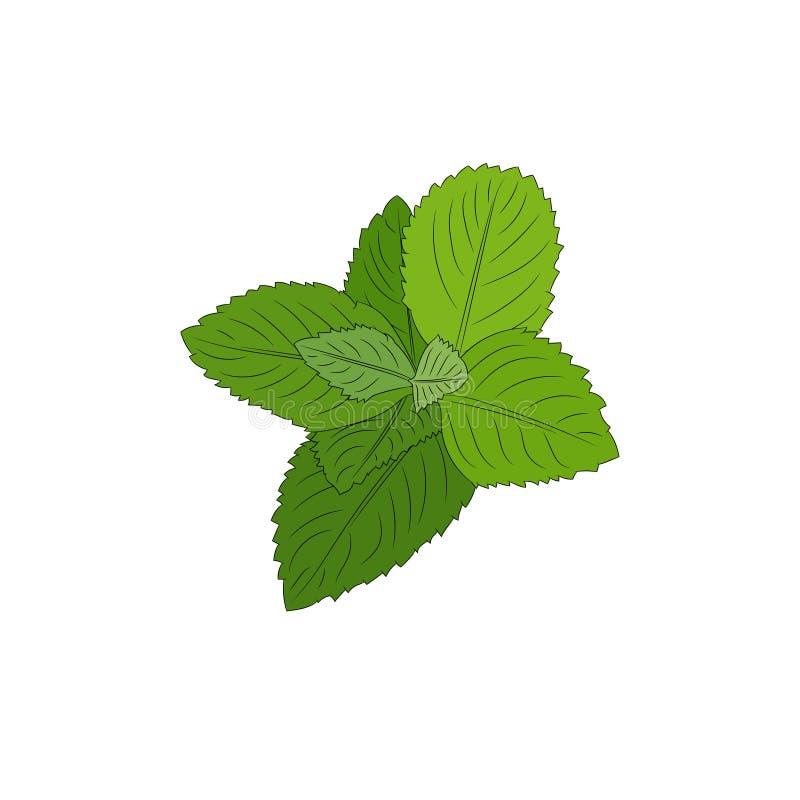 Planta da hortel? ilustração stock