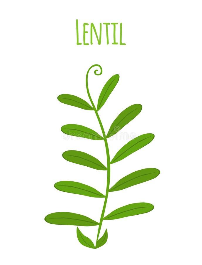 Planta da leguminosa, feijões de soja verdes, feijão da lentilha Ilustração do vetor ilustração stock