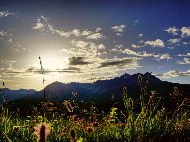 Planta da montanha no outono imagens de stock royalty free