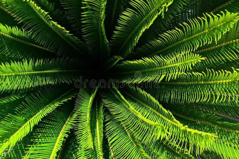 Planta da palmeira da selva com folhas verdes e pontos com teste padrão agradável imagem de stock