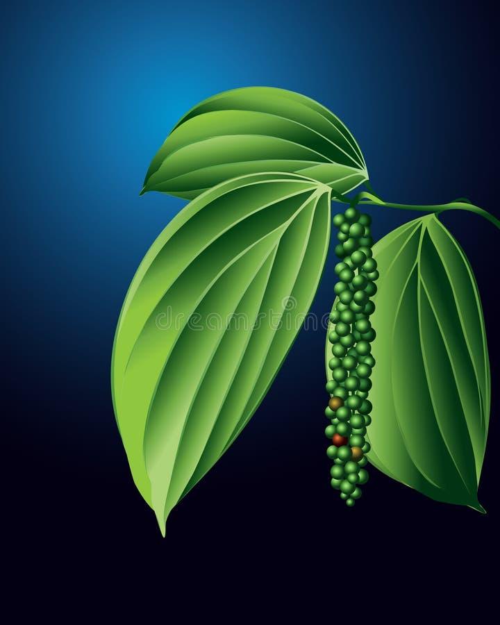Planta da pimenta preta ilustração royalty free