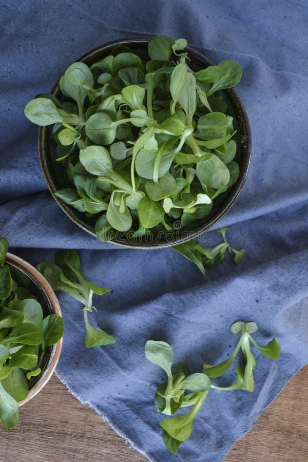 Planta da salada de milho, locusta do Valerianella da erva-benta, salada do valeriana no fundo de madeira imagem de stock