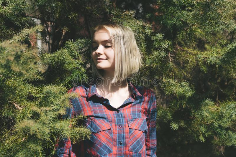 Planta da senhora do moderno na coroa da árvore conífera imagens de stock