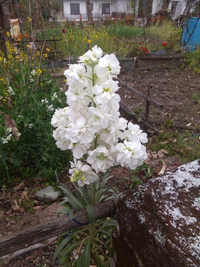 Planta das flores fotos de stock