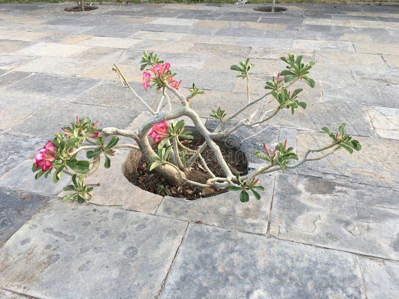 Planta das flores selvagens imagem de stock royalty free