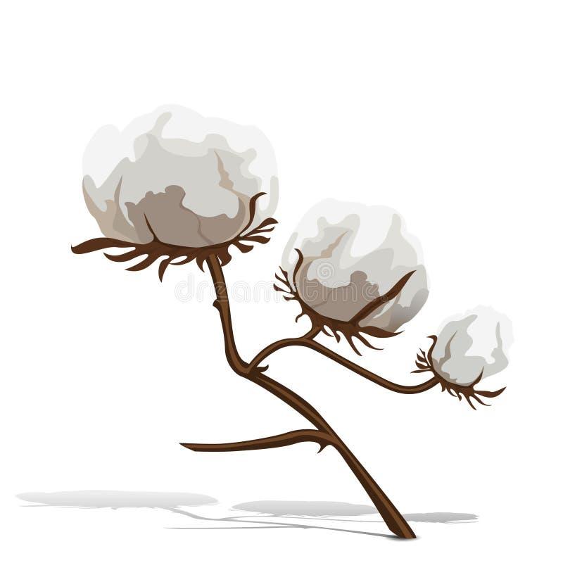 Planta de algodão com folhas e fibras do marrom ilustração royalty free