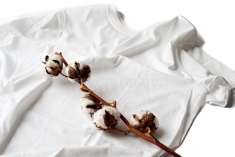Planta de algodón en una camisa de algodón imagen de archivo libre de regalías