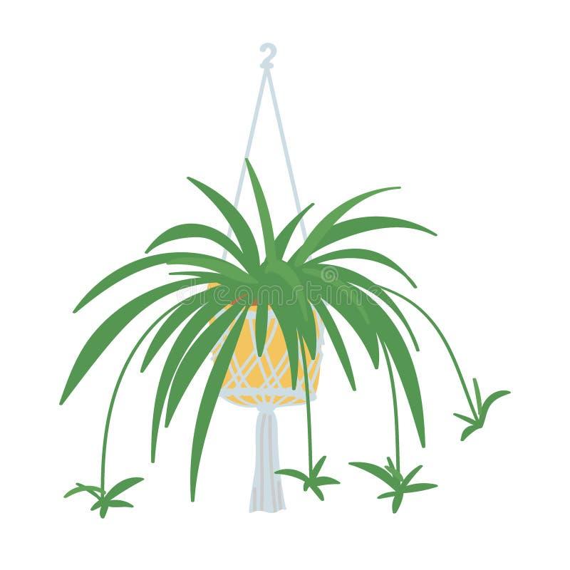 Planta de aranha ilustração royalty free