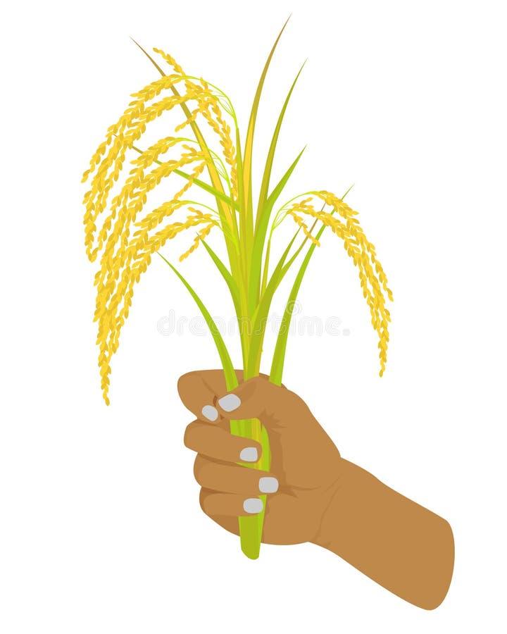 Planta de arroz de la silueta en dand ilustración del vector