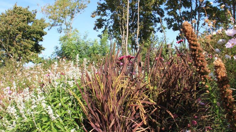 Planta de arroz y flores florecientes imagen de archivo
