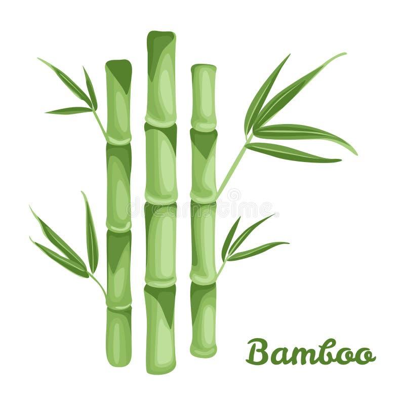 Planta de bambú verde aislada en el fondo blanco stock de ilustración