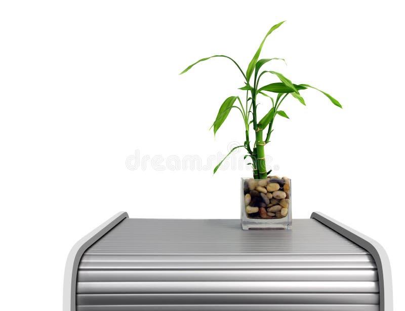 Planta de bambu imagem de stock