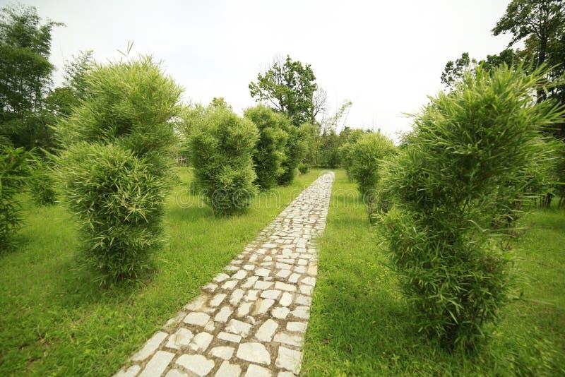 Planta de bambu imagens de stock