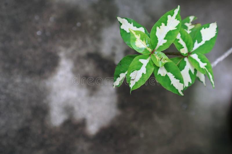 Planta de caricatura en el piso del cemento fotografía de archivo libre de regalías