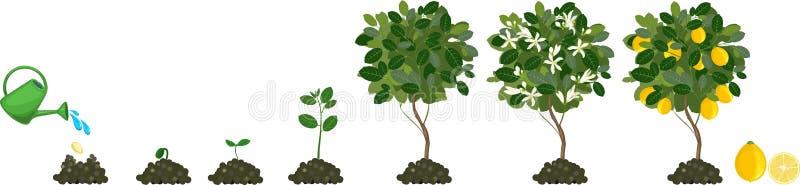 Planta de ciclo de vida ilustração royalty free