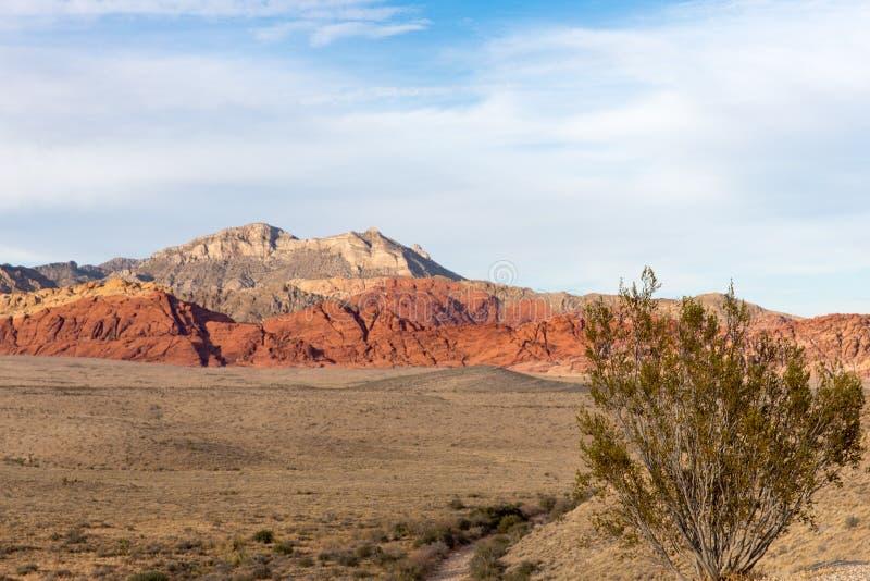 Planta de deserto com os montes da garganta da rocha e espaço vermelhos da cópia foto de stock royalty free