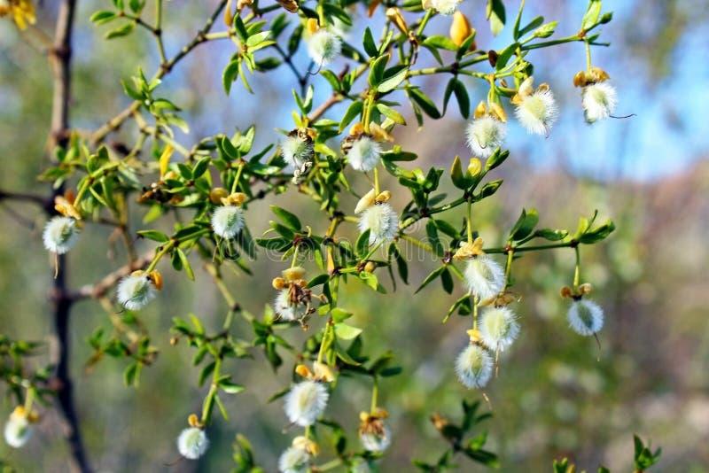 Planta de desierto en la floración imágenes de archivo libres de regalías