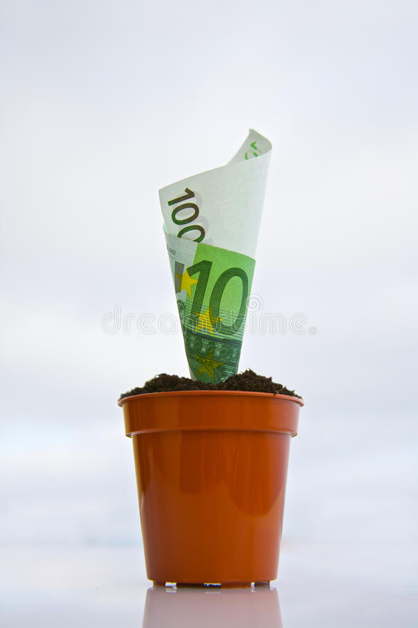 Planta de dinero imágenes de archivo libres de regalías