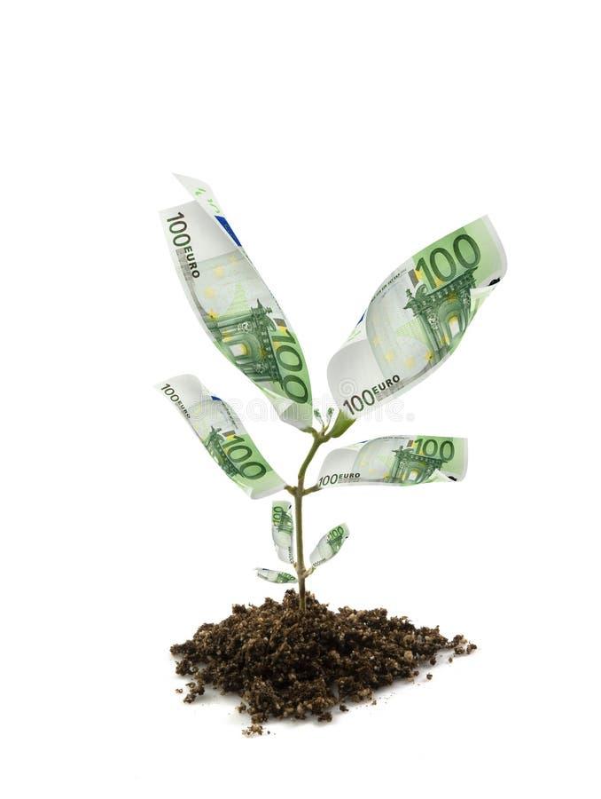 Planta de dinero imagen de archivo