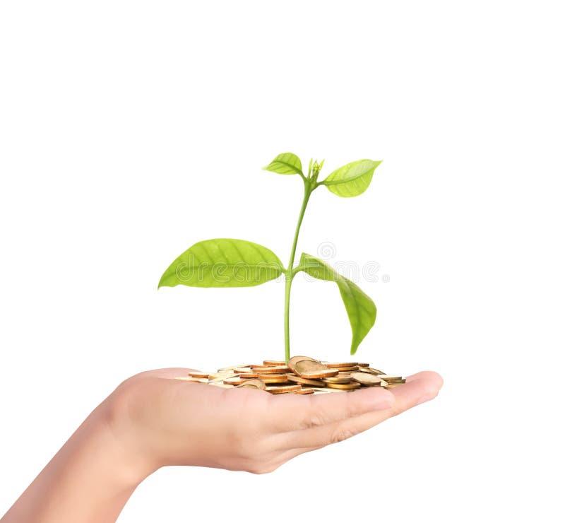 Planta de dinero que crece de monedas a disposición fotos de archivo libres de regalías