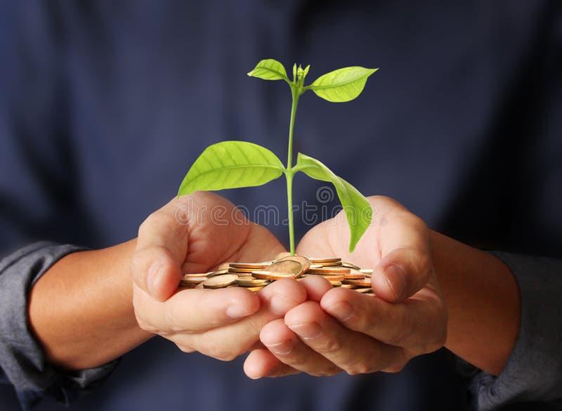 Planta de dinero que crece de monedas a disposición imagen de archivo