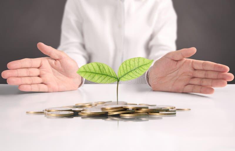 Planta de dinero que crece de monedas a disposición foto de archivo