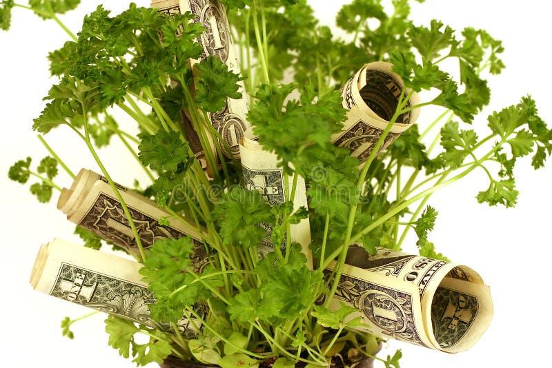 Planta de dinero - serie fotos de archivo libres de regalías