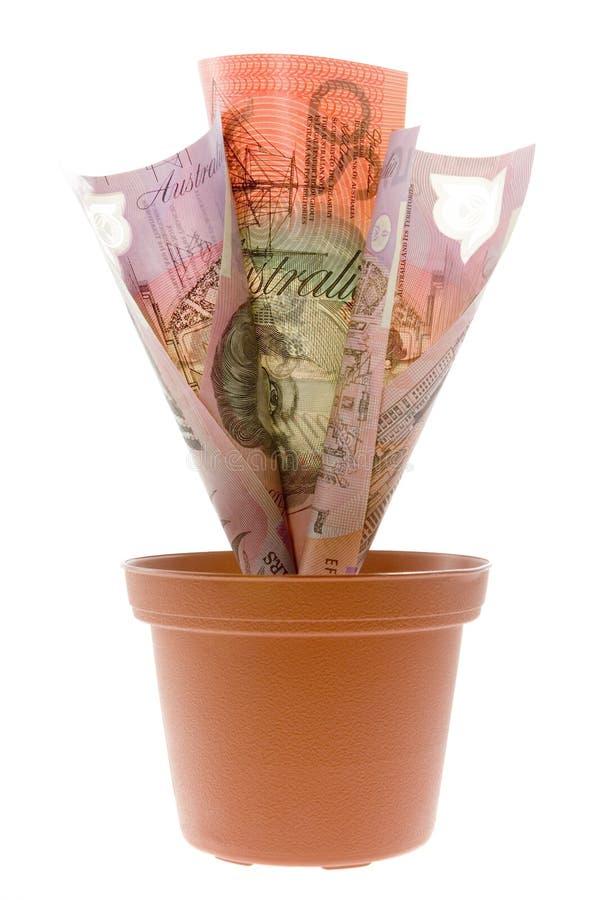 Planta de dinheiro australiana imagens de stock