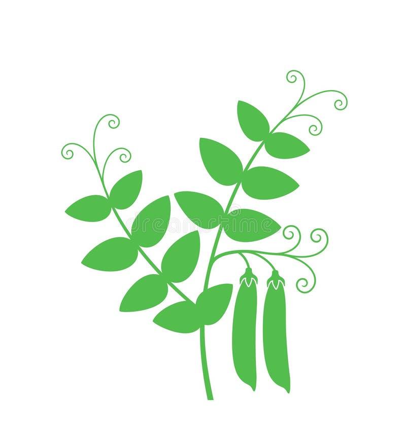 Planta de ervilha Ervilha isolada no fundo branco ilustração do vetor