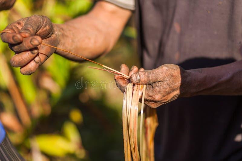 Planta de examen del cardamomo del granjero foto de archivo
