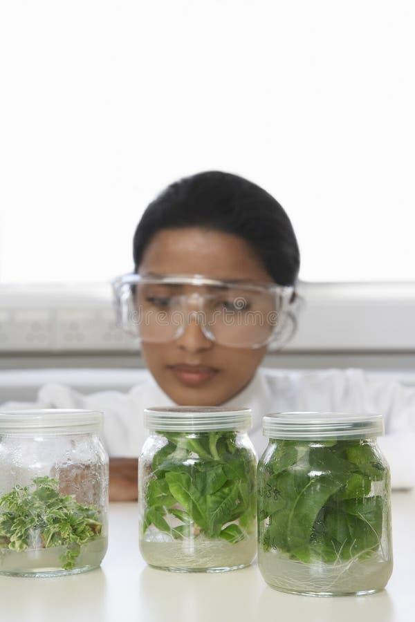 Planta de Examining Jars Containing do cientista imagem de stock royalty free
