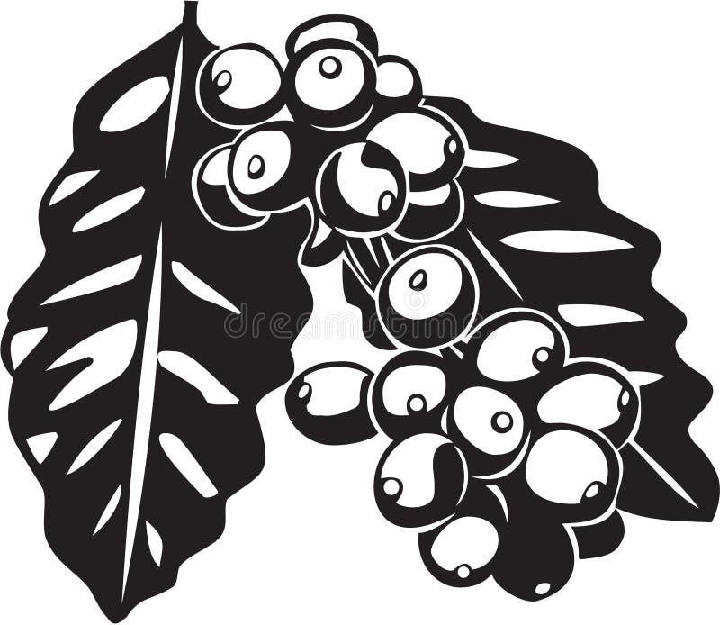 Planta de feijão do café ilustração royalty free