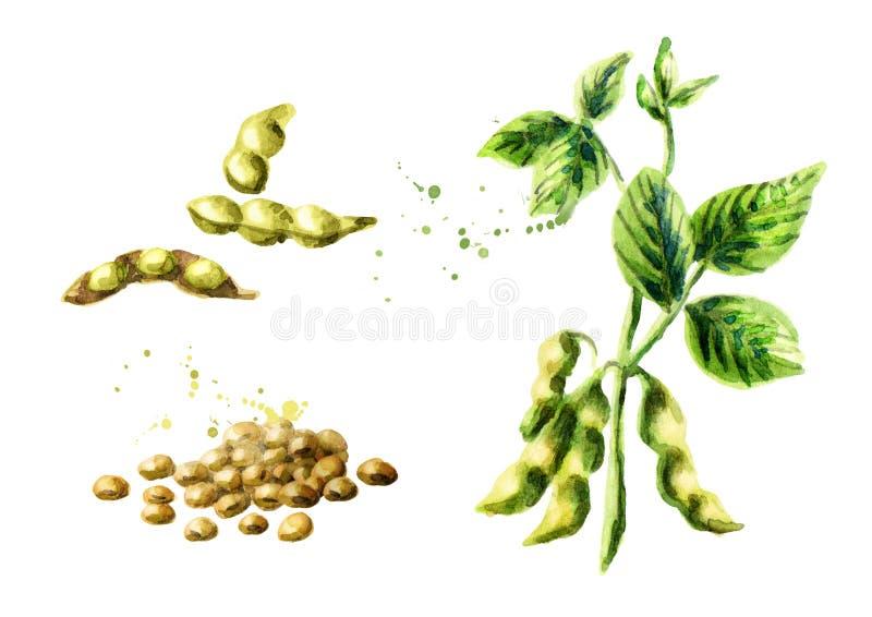 Planta de feijão de soja com as folhas, as vagens e os feijões ajustados ilustração do vetor