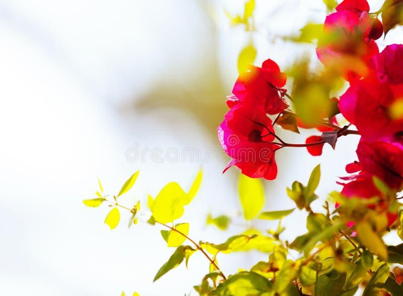 Planta de flores rosadas fotos de archivo libres de regalías