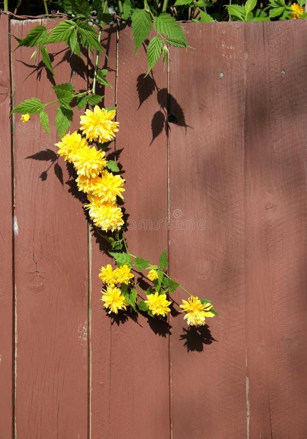 Planta de florescência fotos de stock royalty free